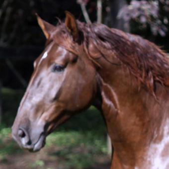 Cavalos Montados